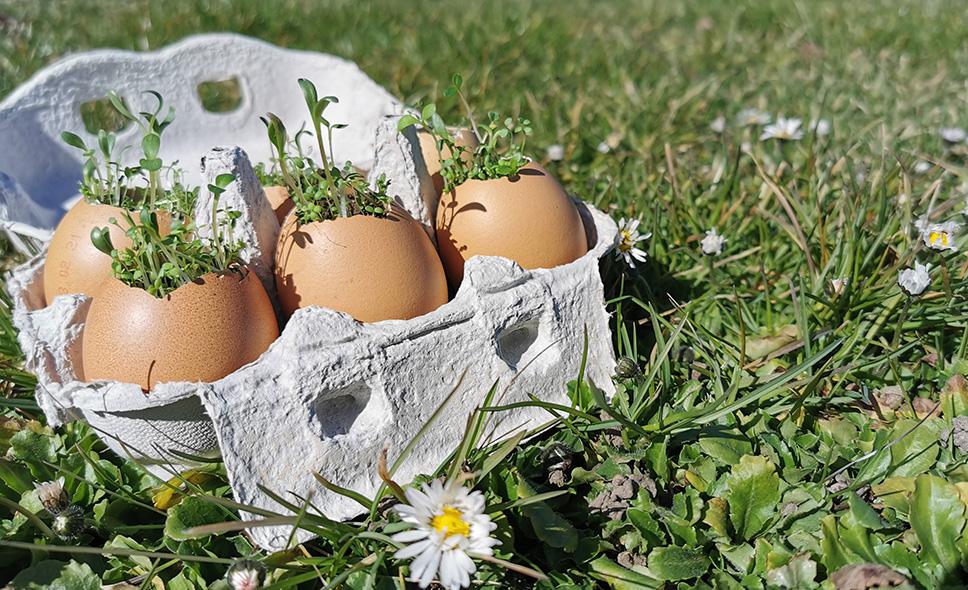 Samenbomben in Eierschalen für Ostern